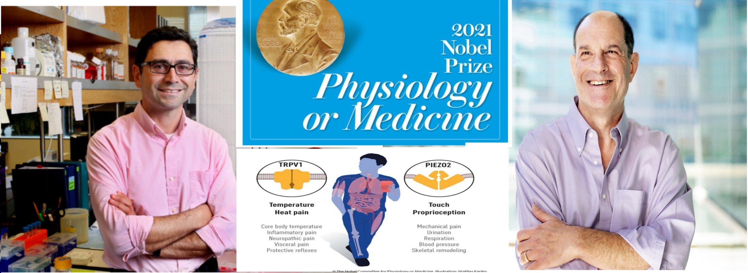Nobel prize 2021, medicine , David Julius, Ardem Patapoutian, somatosensation , temprature, heat, genes, capsascin, sensitive cells,Pain receptors, TRPV1
